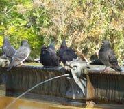 colombe accanto alla fontana fotografia stock
