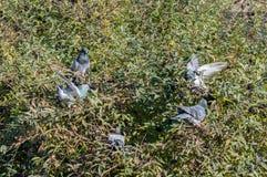 Colombe d'oiseaux se dorant au soleil image libre de droits