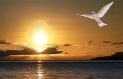 Colombe dans le lever de soleil, la paix et le bonheur de Pâques Images stock