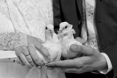 Colombe deux blanche dans les mains des nouveaux mariés images libres de droits