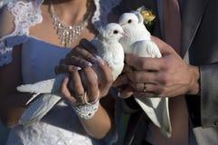 Colombe di cerimonia nuziale Fotografia Stock