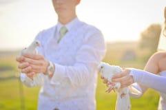 Colombe di cerimonia nuziale Fotografia Stock Libera da Diritti