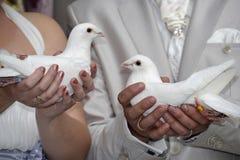 Colombe di nozze Immagine Stock