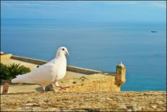 Colombe et mer d'Espagnol images stock
