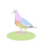 Colombe, illustration de vecteur, oiseau vivant à côté d'un homme Images libres de droits