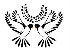 Colombe ou oiseau en vol Images stock