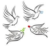 Colombe, pigeon illustration stock