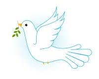 Colombe/pigeon de blanc Images libres de droits