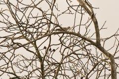 Colombe sauvage sur une branche d'arbre Photo libre de droits