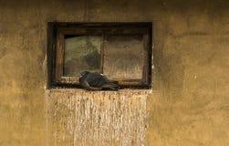 Colombe seule dans la fenêtre de grenier Image libre de droits