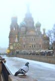 Colombe sur la balustrade, et une église orthodoxe Photos libres de droits