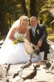 Colombes alimentantes de couples de mariage Photographie stock
