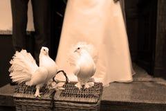Colombes blanches et un couple de mariage Image libre de droits