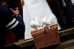 Colombes blanches et un couple de mariage Photo stock