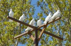 Colombes blanches - un symbole de paix et d'amour Photo stock
