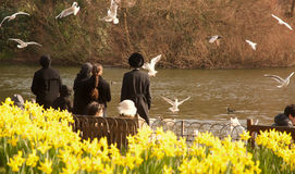 Colombes dans Hyde Park, Londres Photos stock