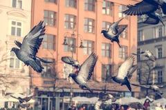 Colombes dans le vol au-dessus de la zone urbaine Photo stock
