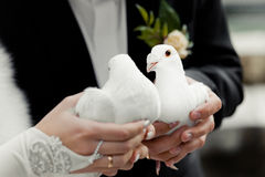 Colombes de mariage Image stock