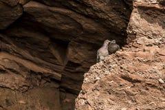 Colombes de roche dans Canada à marée basse célèbre du Nouveau Brunswick de baie de Fundy de raz-de-marée de formations de roches Photo stock