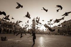 Colombes en vol au-dessus de place principale de vieille ville Photo stock
