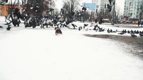 Colombes sur la neige clips vidéos
