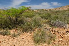 Colombia, Bushes Penisula in La Guajira Stock Photography