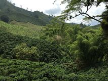 Colombia coffee valley green Royalty Free Stock Photo