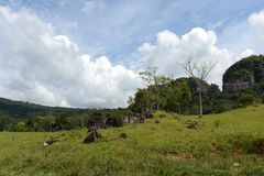 Colombia. N landscape near the town of San Jose del Guavere Stock Image