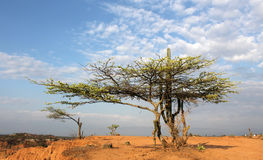 Colombia. The  desert of tatacoa Royalty Free Stock Images