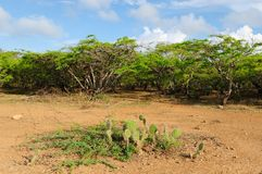 Colombia, Penisula la Guajira bushes Stock Images
