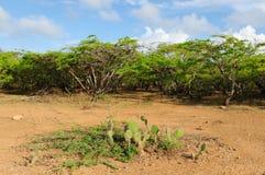 Colombia, Penisula la Guajira bushes Stock Images
