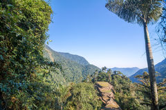 Free Colombia S Lost City Royalty Free Stock Image - 39020266