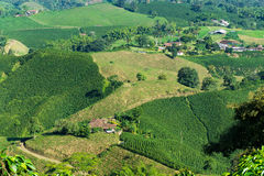 Colombian Coffee Farms stock photography