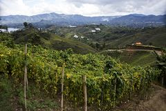 Colombian landscape of the coffee axis Manizales royalty free stock photo
