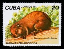 Colombianus Hutia Geocapromys, доисторическое serie животных, около 1982 Стоковое фото RF