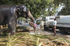 COLOMBO, ΣΡΙ ΛΑΝΚΑ †«στις 10 Φεβρουαρίου 2017: Ένας ελέφαντας είναι καθαρός για ένα φεστιβάλ Στοκ Εικόνες