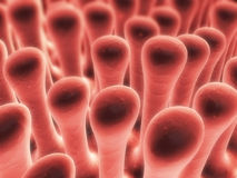 Colon villi Stock Photos