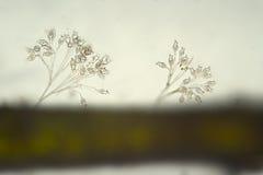 Colonia da vorticela dos Ciliata de Ciliophora em de água doce Micro-organismos pelo microscópio Fotografia de Stock Royalty Free