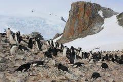 Colonia de grajos del pingüino de Chinstrap en la Antártida Imagenes de archivo