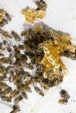 Colonia de Honey Bees Foto de archivo libre de regalías