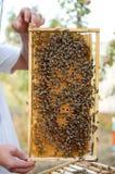 Colonia de la abeja en los panales Apicultura y miel el conseguir colmena imagen de archivo