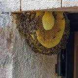 Colonia de la abeja en una puerta en una casa de la familia Fotografía de archivo libre de regalías