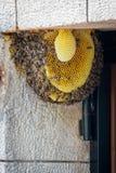 Colonia de la abeja en una puerta en una casa de la familia Foto de archivo