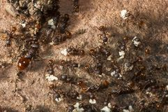 Colonia de la hormiga Imagen de archivo libre de regalías