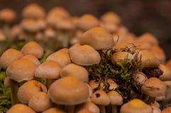 Colonia de Mushrom Fotografía de archivo