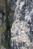 Colonia de pingüinos que suben al top del ártico de la montaña Foto de archivo