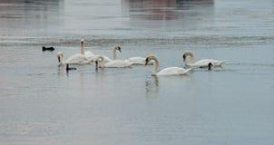 Colonia degli uccelli sul lago di sale in Pomorie, Bulgaria Fotografie Stock