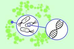 Colonia dei batteri Fotografia Stock