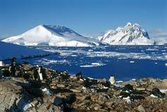 Colonia dei pinguini Fotografia Stock Libera da Diritti