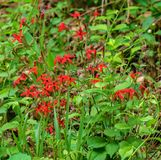 Colonia dei Wildflowers di rosa di fuoco immagini stock